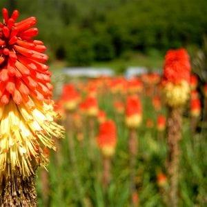 Oregon Coastal Flower Farm