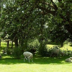 Trent Family Farms